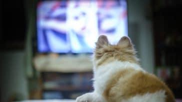 chiens télévision