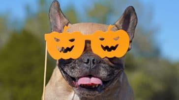 chien avec lunettes Halloween