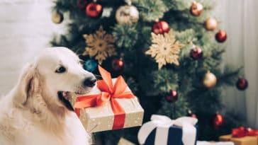 chien qui tient un cadeau dans sa gueule