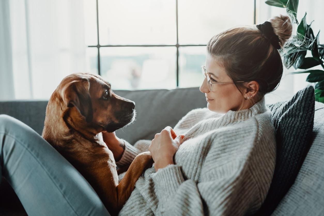 regards entre un chien et sa maitresse