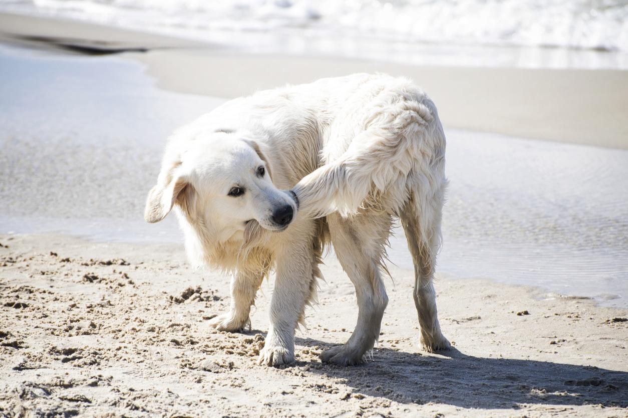 chien qui se mord la queue