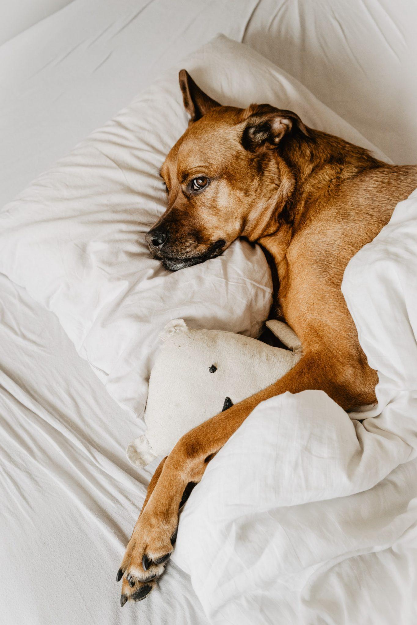 Chien qui dort dans un lit