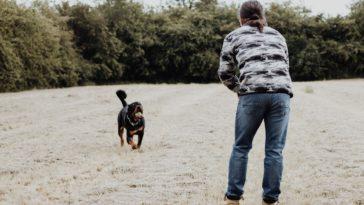 chien qui court vers son maitre