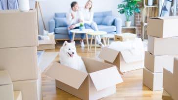 chien dans un carton d'emménagement dans un appartement