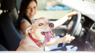 chien heureux en voiture