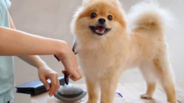 petit chien en train de se faire toiletter