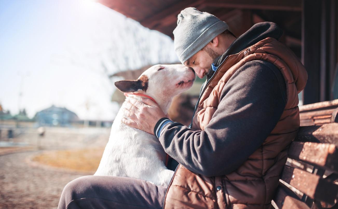 Bull Terrier qui fait un câlin à son maître assis sur un banc