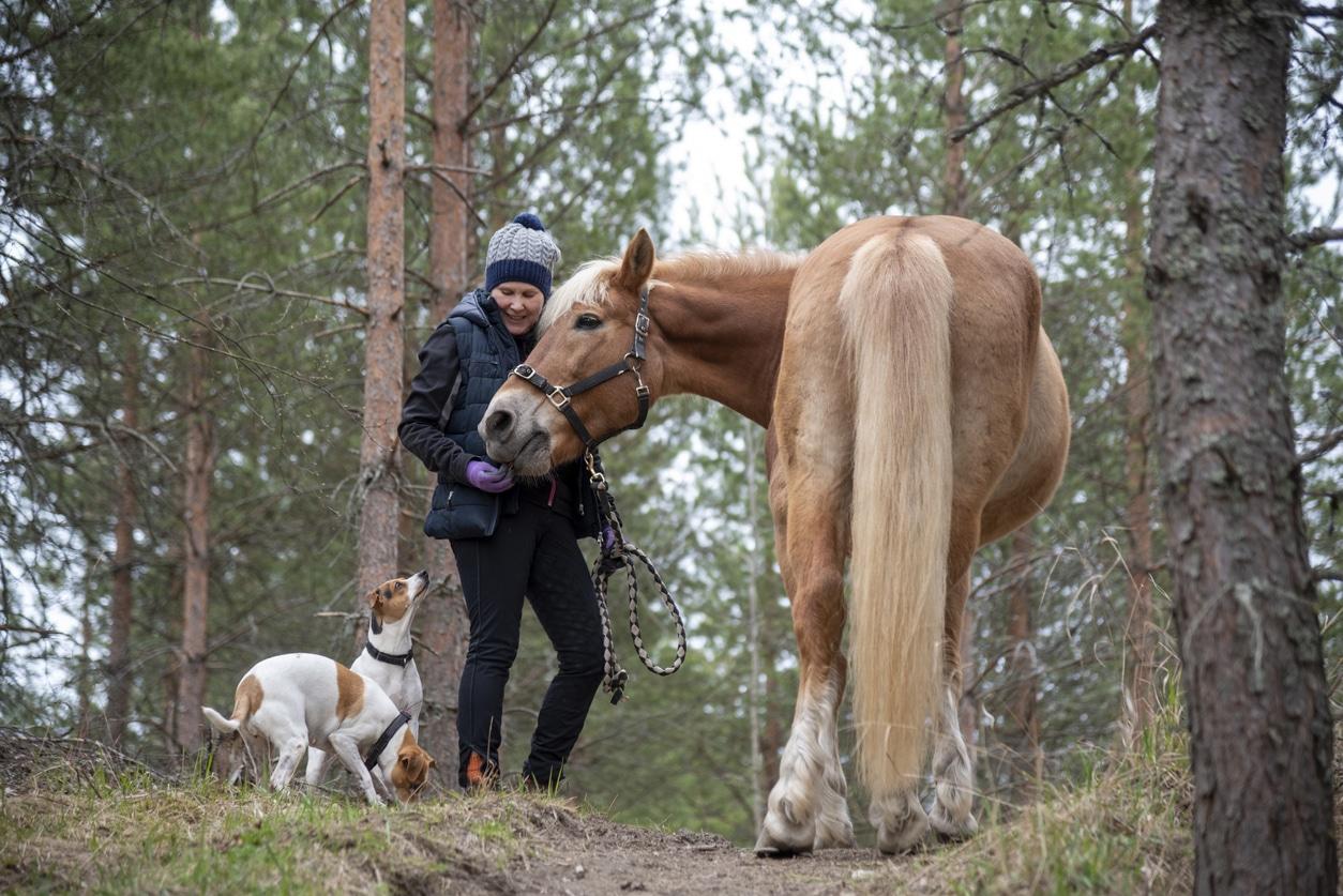 deux chiens et un cheval avec leur propriétaire en forêt