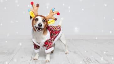 chien déguisé en renne de Noël