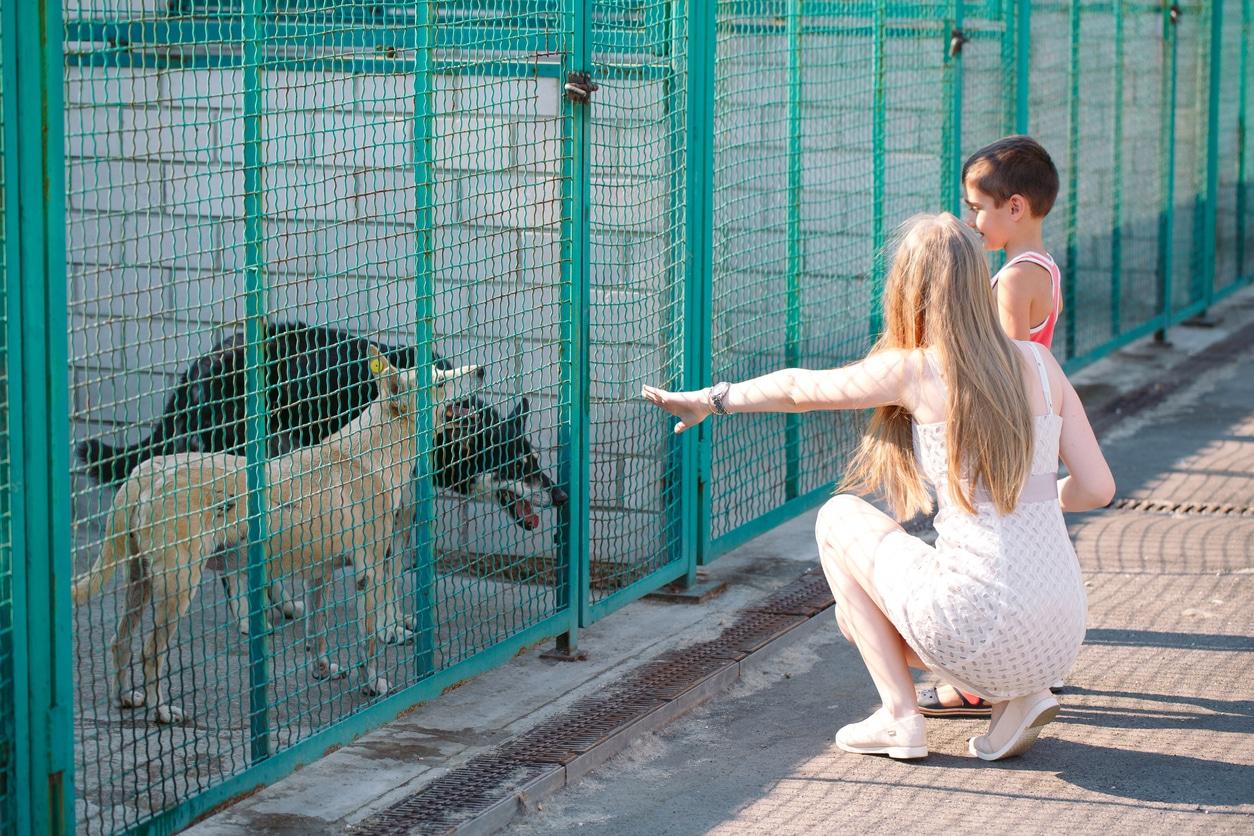 une famille dans un refuge qui rend visite aux chiens