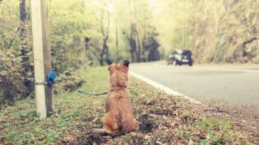 chien abandonné attaché à un poteau dans la forêt