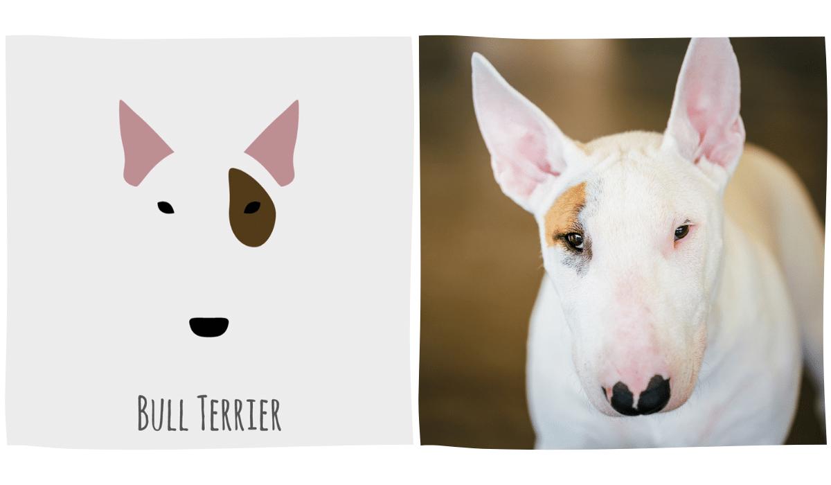 dessin minimaliste d'un Bull Terrier à côté d'une photo du Bull Terrier