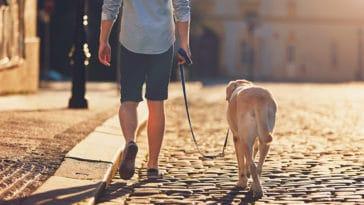 Chien en promenade avec son maître sur une route pietonne