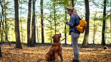 Chien assis écoutant sa maîtresse en pleine forêt