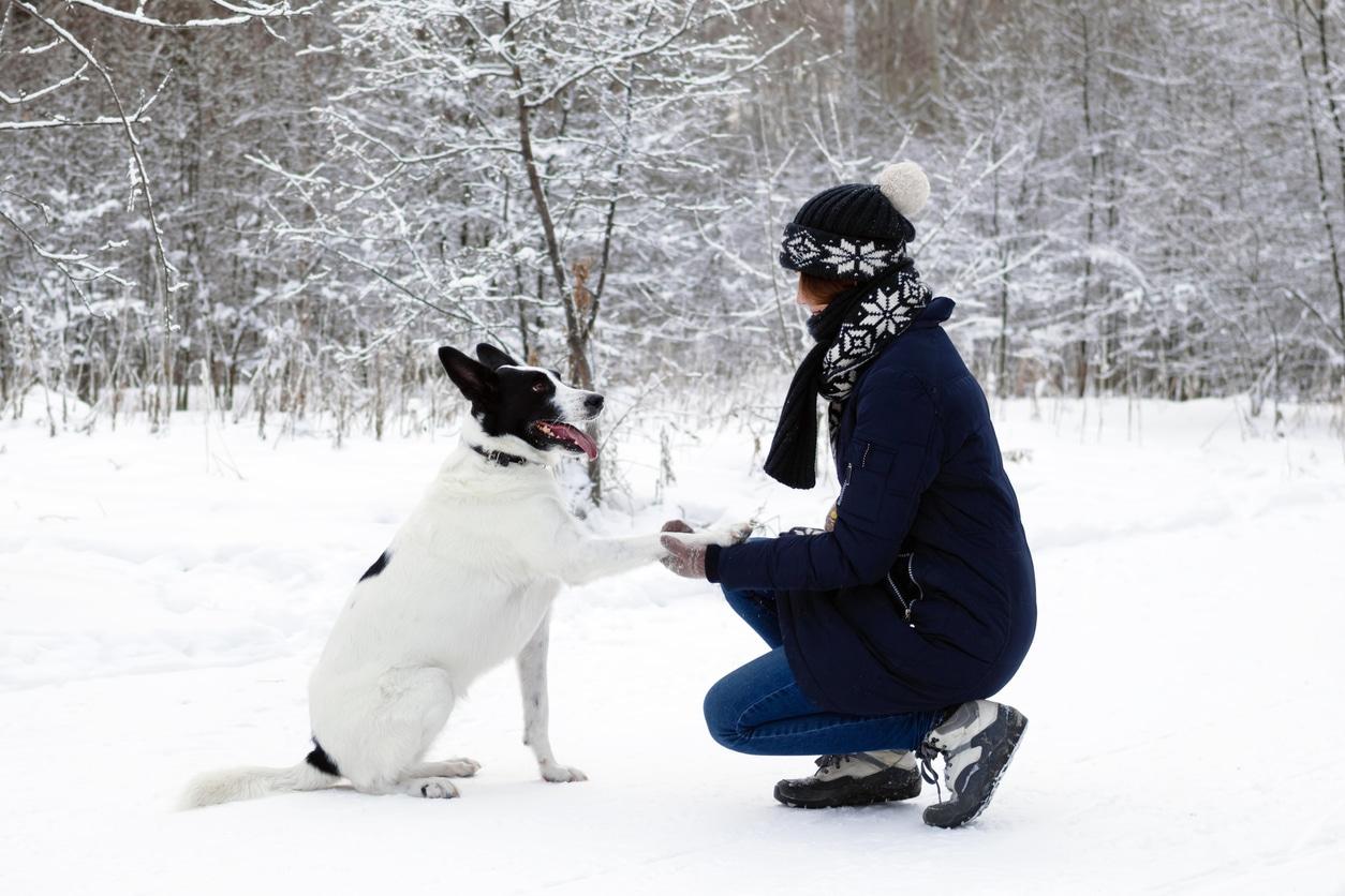 Chien qui donne la patte en hiver