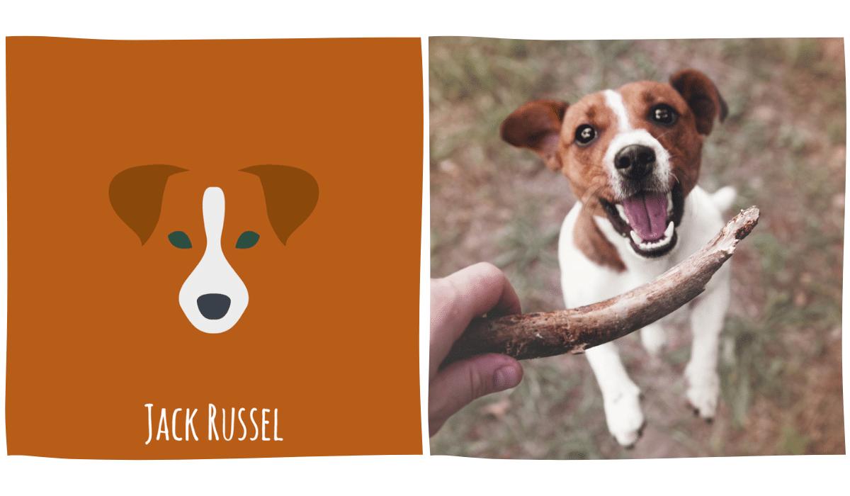 dessin minimaliste d'un Jack Russel à côté d'une photo de Jack Russel