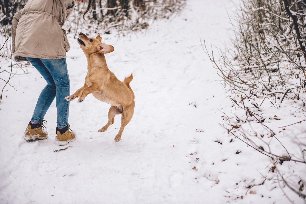 petit chien qui saute sur quelqu'un