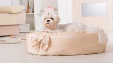 chien dans son panier