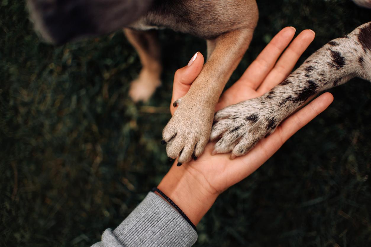 Deux chiens donnant la patte