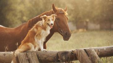 Chien assis sur une barrière en bois avec un cheval à côté