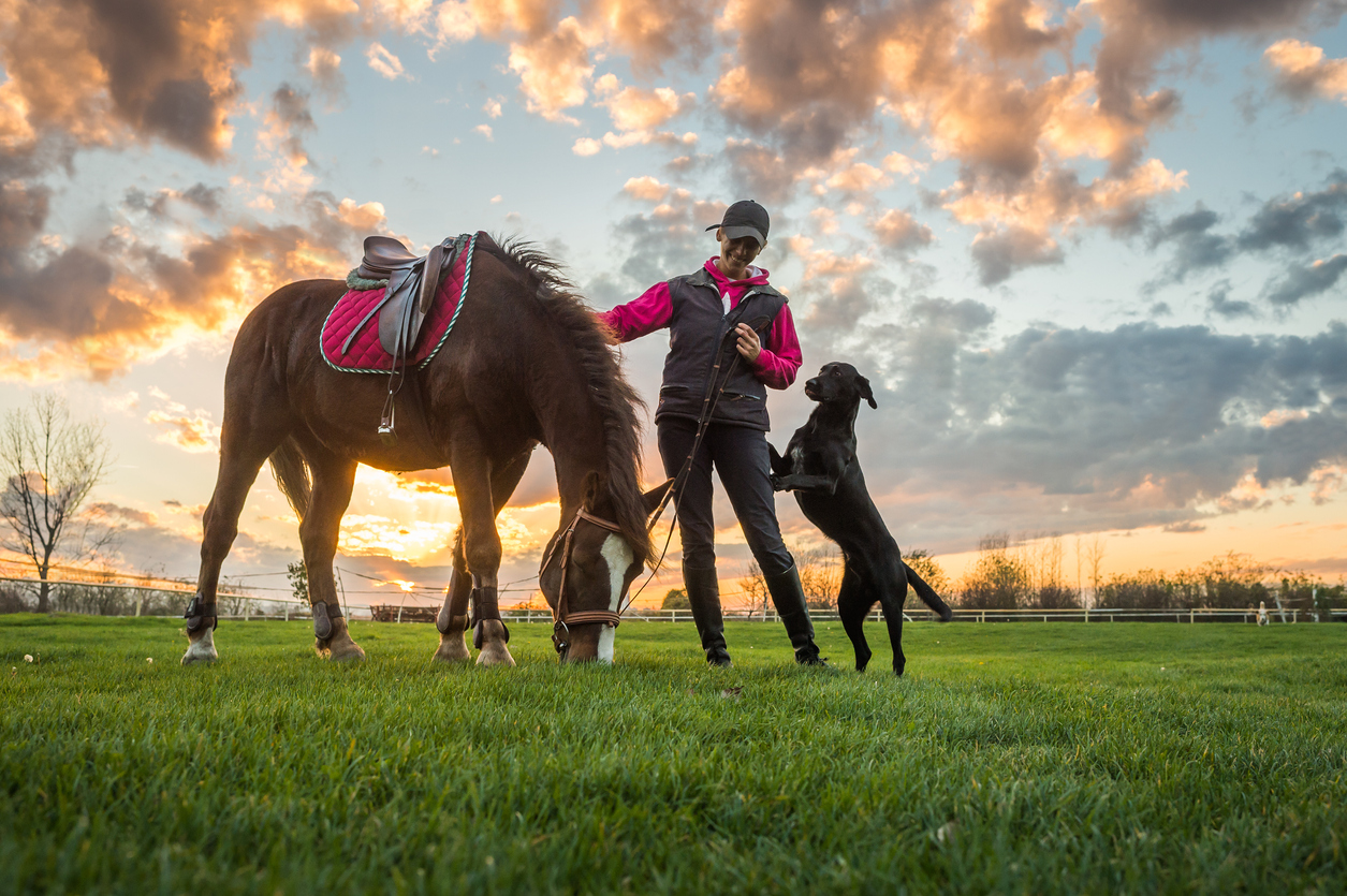 Cheval et chien avec leur maîtresse en balade