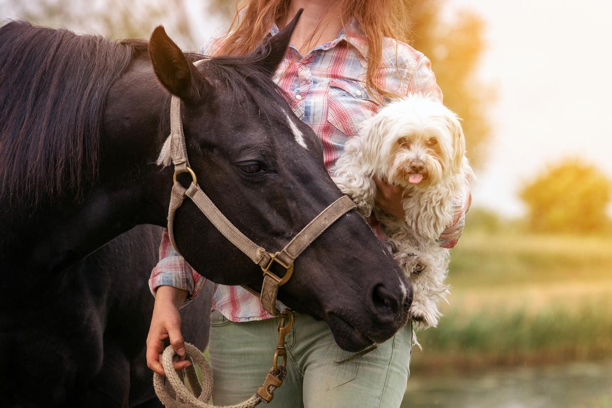 Chien dans les bras de sa maîtresse faisant connaissance avec un cheval en longe