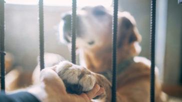 chien dans un refuge qui pose sa patte dans la main d'un homme