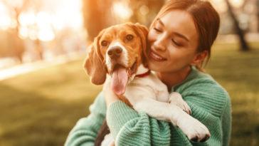 Chien Beagle dans les bras de sa maîtresse