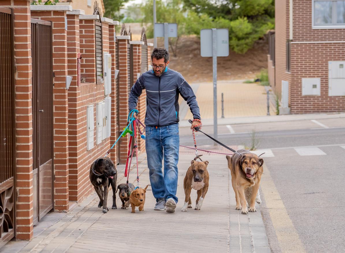 Dog Sitter en train de promener les chiens