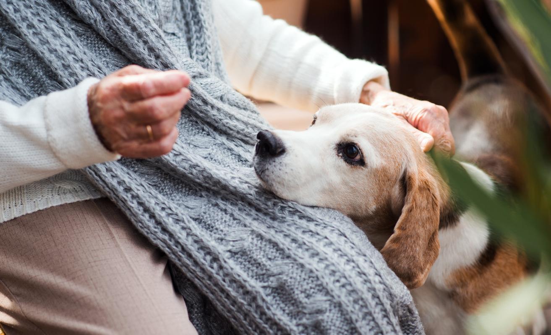chien qui pose la tête sur sa maitresse
