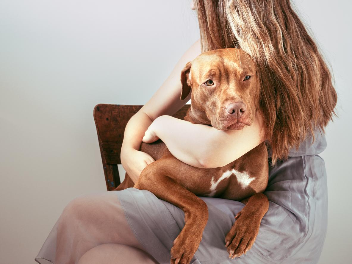 chien sur les genoux de sa propriétaire