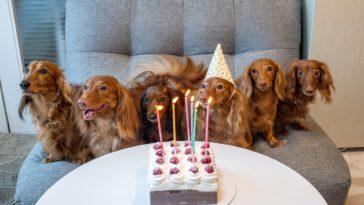 chiens autour d'un gâteau d'anniversaire