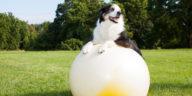chien avec gros ballon