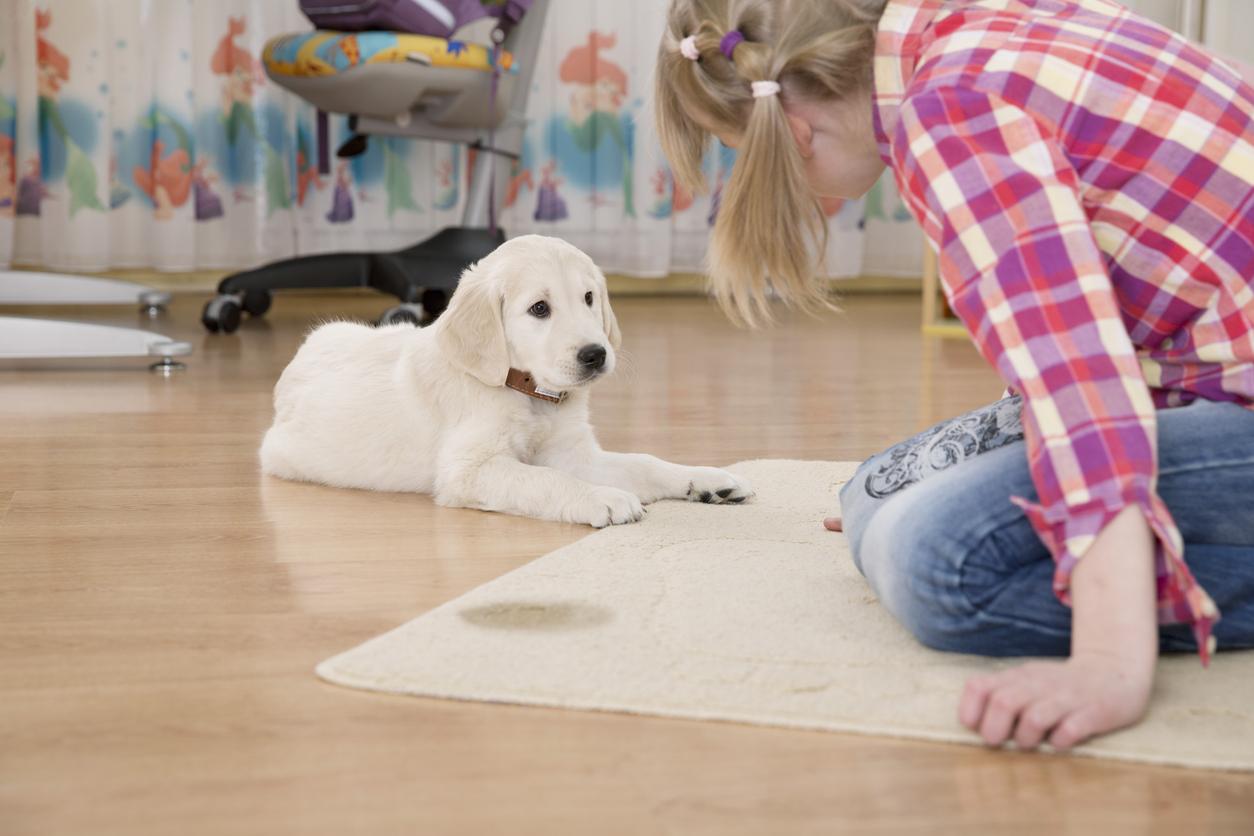 Chien qui a fait pipi sur le tapis