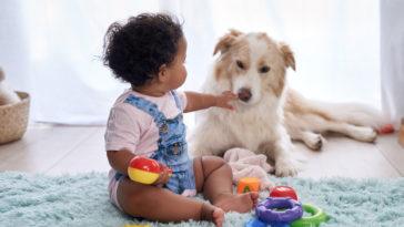 Chien couché à côté d'un bébé qui joue au sol