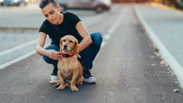 maitresse qui met un collier à son chien