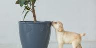 petit chiot en train de renifler le pot d'une plante