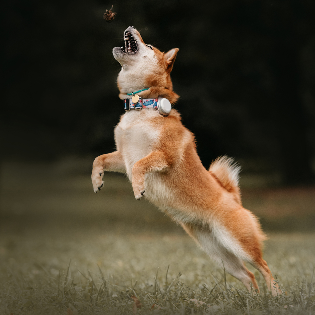 chien en train de sauter en l'air