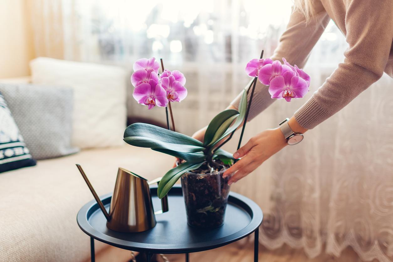 orchidée d'intérieur