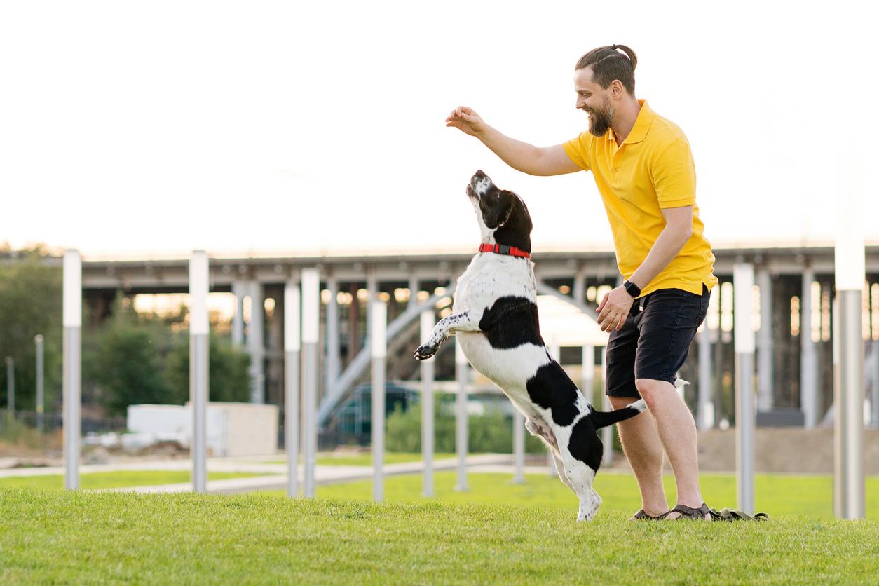 chien qui saute en l'air