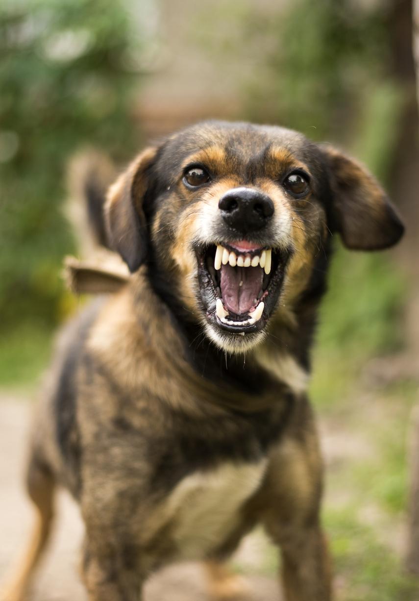 chien qui semble agressif