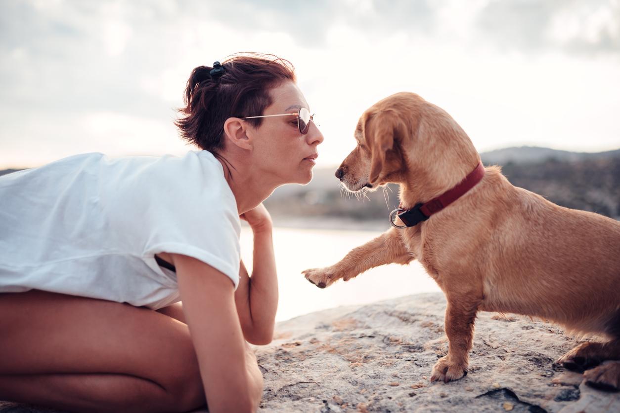 Chien qui donne la patte à sa maîtresse sur la plage