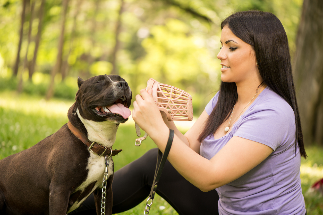 Dame en train de mettre une museliere à son chien