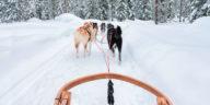 Chiens de traineaux qui tractent dans la neige
