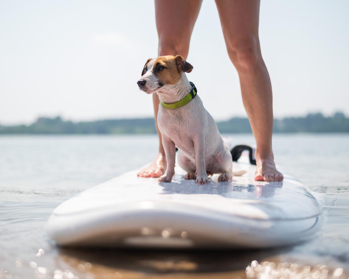 Chien assis sur le paddle avec son maître
