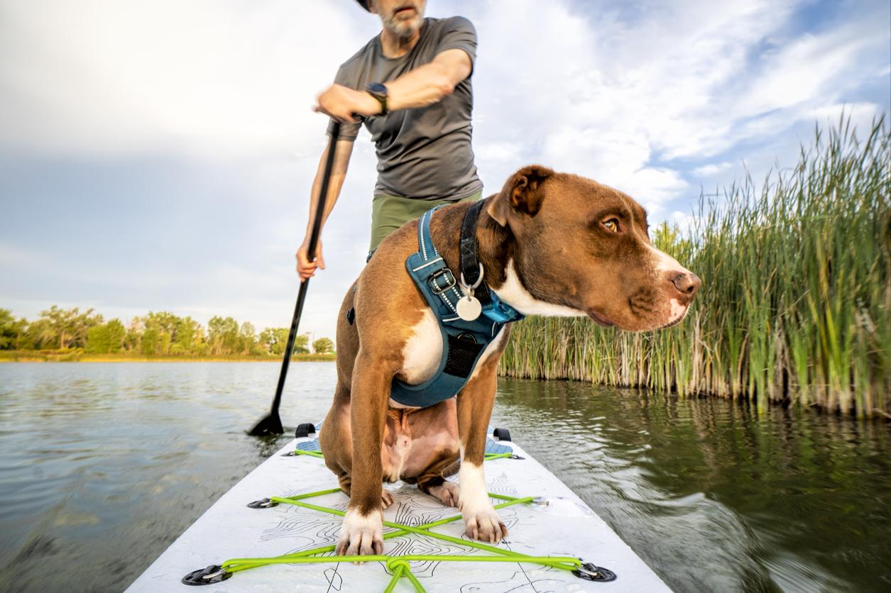 Chien sur un paddle avec son maître