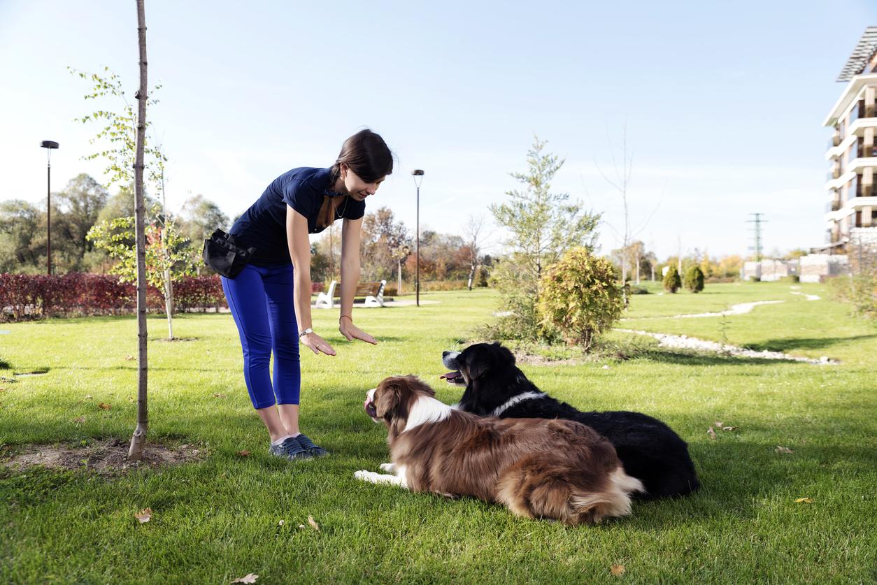 Educatrice canine avec deux chiens