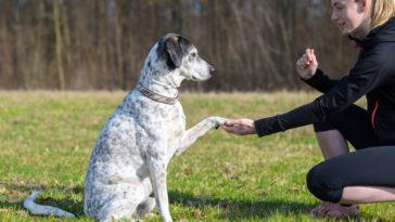 chien qui donne la patte