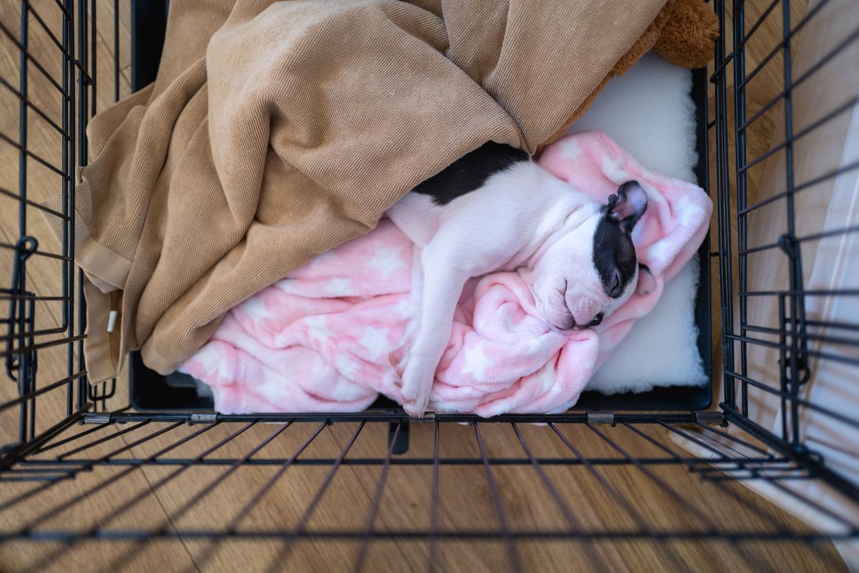 chiot en train de dormir dans sa cage