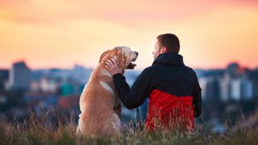chien avec son maitre qui regarde la ville au loin